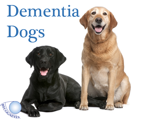 Signs Of Dementia In Dogs Uk